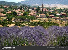 Lavender Village Turkey Kuyucak Isparta ⬇ Stock Photo, Image by © yonca60  #227121844