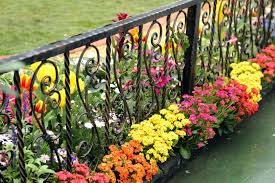 iron garden fence border an ornate black wrought iron fence with a wooden base low brightly iron garden fence border