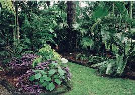 Small Picture palm trees in garden Garden Pinterest Tropical garden
