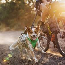 10 Best Dog Harnesses For Every Type Of Dog 2019 The