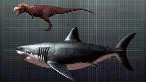 megalodon shark compared to t rex. Contemporary Shark Megalodon And T Rex U2013 Comparison With Shark Compared To T Rex K