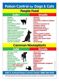 In extreme cases it can lead to a slowed heart rate and convulsions. Amazon Com Poison Control For Dogs And Cats Refrigerator Magnet Food And Plants Toxic To Cats And Dogs Kitchen Magnet Animal Safety Magnet 5 Inches X 7 Inches 1 Industrial Scientific