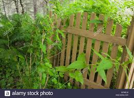 wood picket fence gate. Brown Wooden Picket Fence Gate In A Landscaped Residential Backyard Garden Summer. - Stock Wood