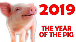 Image result for pig year 2019