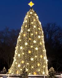 The National Christmas tree (at the White House)