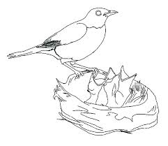 Free Printable Bird Nest Coloring Pages Bltidm