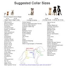 Pug Weight Chart In Kg Pet Collars For Dogs By Glow Castle Basic Polyester Nylon Collar Lead Harness For Dog
