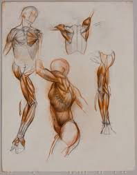 sabin howard s anatomy for artists anatomical structure and the dynamics of movement part 2