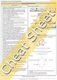 biochemistry nucleotide metabolism  review cheat sheet