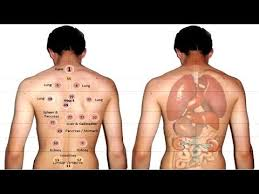 Hijama Cupping Points Chart Download Mp3 Hijama Points Diagram 2018 Free