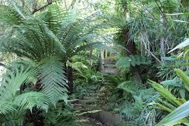 Small Picture Australian Native Garden Design Ideas Australian Outdoor Living