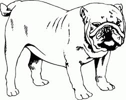Small Picture Printable 31 Bulldog Coloring Pages 4661 Bulldog Coloring Pages