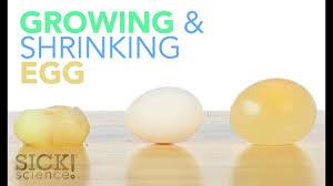 Growing And Shrinking Growing And Shrinking Egg Sick Science 187