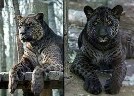 Animals Thechive Animals Weird Animals Wild Cats