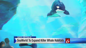 SeaWorld to expand killer whale habitats at parks