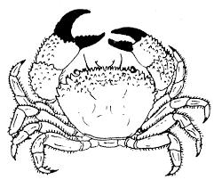 Crabe 14 Animaux Coloriages Imprimer