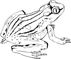 tree frog template kermit the frog printable coloring pages color cute page cartoon