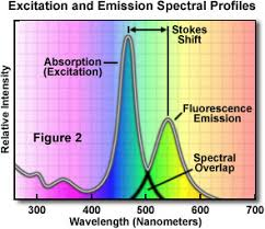 Fluorescence Overview Of Fluorescence Excitation And