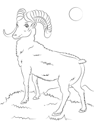Small Picture Mountain Bighorn Sheep coloring page Free Printable Coloring Pages