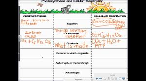 Compare And Contrast Cellular Respiration And Photosynthesis Lesson