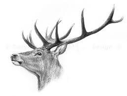Red Deer Stag Deer Oh Deer In 2019 Deer Drawing Drawings Deer