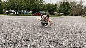 Ups Dog Costume Size Chart Rambo Dog Costume