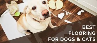 6 best pet friendly flooring options
