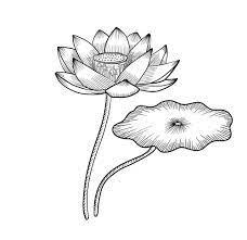 Tranh tô màu hoa sen đẹp - Phụ Kiện MacBook Chính Hãng