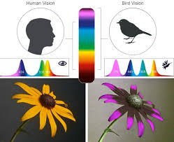 Photography Of The Invisible World How To Simulate What Birds May
