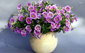نتيجه تصويري براي گل هاي زيبا در گلدان ها