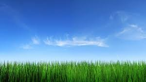 grass and sky backgrounds. Exellent And Grass Sky Picture 4 Throughout Grass And Sky Backgrounds R