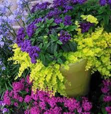 Best 25 Balcony Garden Ideas On Pinterest  Small Balcony Garden Container Garden Plans Flowers