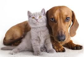 Resultado de imagem para Câmara aprova projeto que proíbe extermínio de cães e gatos
