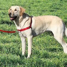 12 Up To Date Martha Stewart Dog Harness Size Chart