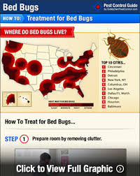 how to rid of bed bugs snippet