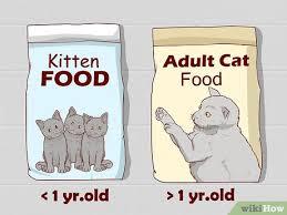 British Shorthair Weight Chart Kg 3 Ways To Care For A British Shorthair British Blue Cat