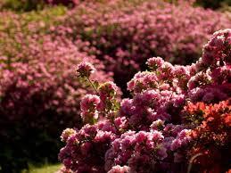 best secret gardens and parks in