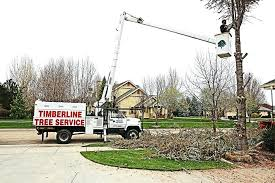 tree service boise this past winters harsh weather took a toll on many trees in the terrys e84