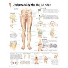 Understanding The Hip Knee Chart