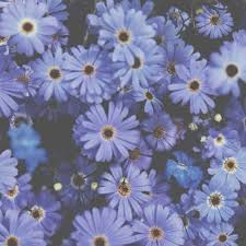 blue flowers background tumblr. Delighful Background Blue Flowers  Tumblr Backgrounds Cute  Wallpaper Nature Inside Blue Flowers Background Pinterest