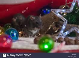 Schwarz Neu Jahr Ratten Christbaumschmuck Und Einen