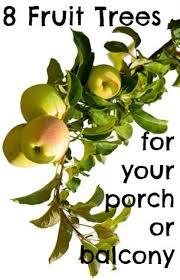 11 Best Dwarf Trees Images On Pinterest  Gardening Dwarf Fruit Pots For Fruit Trees