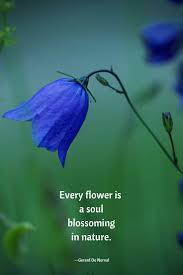 Soulful Quote With A Blue Flowerevery Flower Is A Soul