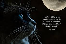 Loss Of A Cat Quotes Delectable Condolence Messages For Loss Of Pets Dog Cat And Other Pets