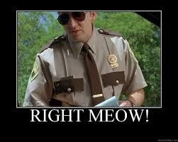 Right Meow meme, gifs, origin - PandaWhale via Relatably.com