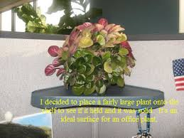 office cubicle plants. Add Some Cubicle Storage With A Hanging Corner Shelf Unit - CubicleBliss.com Office Plants