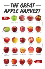 Apple Variety Chart Comparing Apples To Apples Sprouts Farmers Market