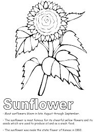 Small Picture Sunflower coloring page