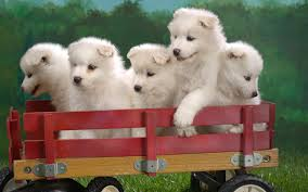 cute puppies and sitting on wheel images free