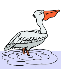 Small Picture Pelican 1 Coloring Pages for Kids to Color and Print
